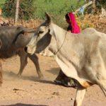 עוד 2 פרות קדושות בקידום המוסיקה שהגיע הזמן לשחוט
